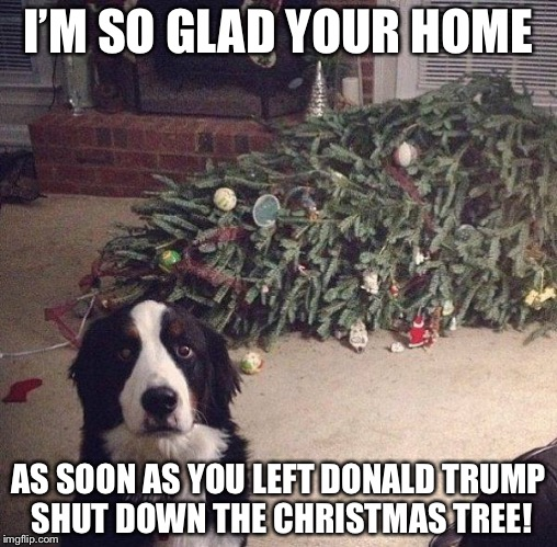 Dog Christmas Tree | I'M SO GLAD YOUR HOME AS SOON AS YOU LEFT DONALD TRUMP SHUT DOWN THE CHRISTMAS TREE! | image tagged in dog christmas tree,memes,funny | made w/ Imgflip meme maker
