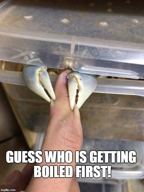 Ouch | GUESS WHO IS GETTING BOILED FIRST! | image tagged in crab,claws | made w/ Imgflip meme maker