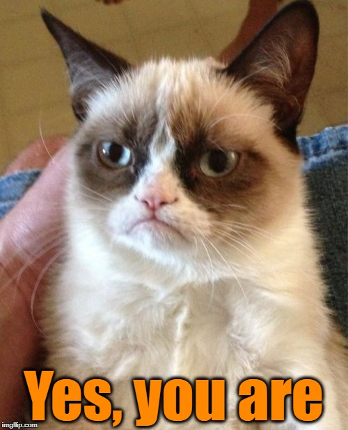 Grumpy Cat Meme | Yes, you are | image tagged in memes,grumpy cat | made w/ Imgflip meme maker