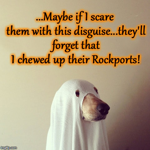Ghost Week! A LaurynFlint event! | ...Maybe if I scare them with this disguise...they'll forget that I chewed up their Rockports! | image tagged in guilty doggo in sheet | made w/ Imgflip meme maker