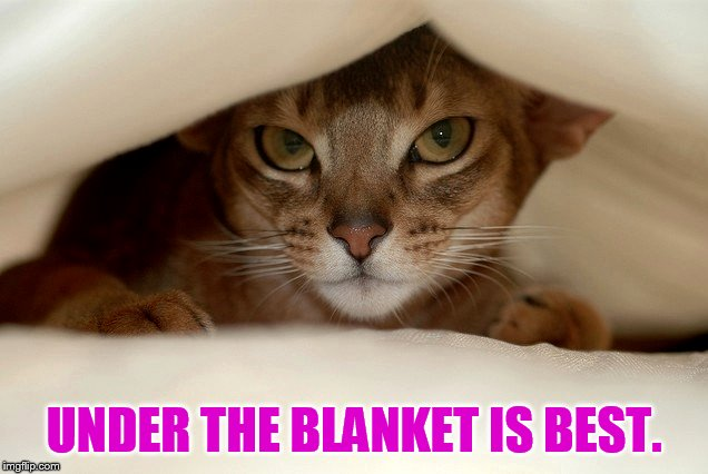 UNDER THE BLANKET IS BEST. | made w/ Imgflip meme maker