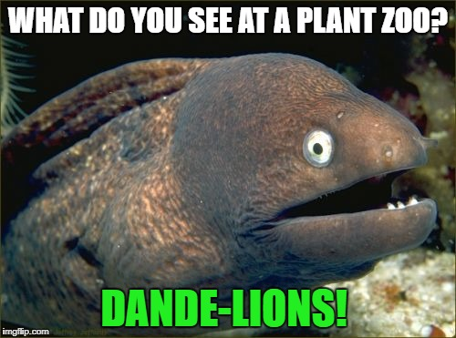 Bad Joke Eel Meme | WHAT DO YOU SEE AT A PLANT ZOO? DANDE-LIONS! | image tagged in memes,bad joke eel | made w/ Imgflip meme maker