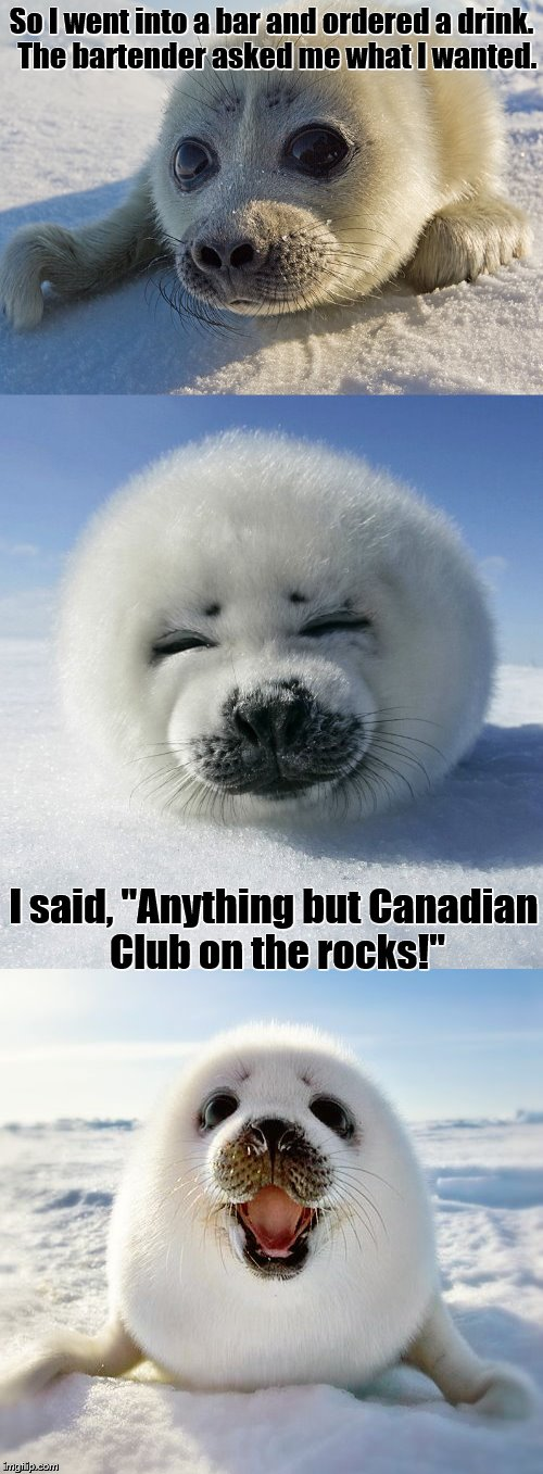 "Bad Pun Baby Seal | So I went into a bar and ordered a drink.  The bartender asked me what I wanted. I said, ""Anything but Canadian Club on the rocks!"" 