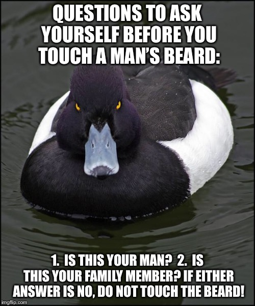 Angry duck | QUESTIONS TO ASK YOURSELF BEFORE YOU TOUCH A MAN'S BEARD: 1.  IS THIS YOUR MAN?  2.  IS THIS YOUR FAMILY MEMBER?IF EITHER ANSWER IS NO, DO  | image tagged in angry duck | made w/ Imgflip meme maker
