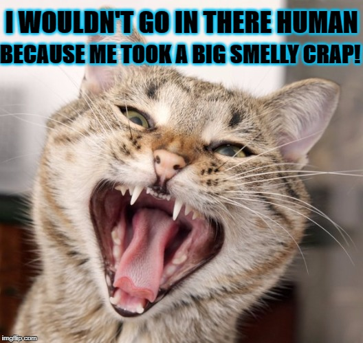 I WOULDN'T GO IN THERE HUMAN BECAUSE ME TOOK A BIG SMELLY CRAP! | image tagged in big crap | made w/ Imgflip meme maker