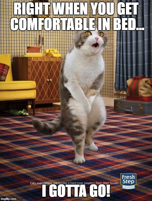 Gotta Go Cat Meme | RIGHT WHEN YOU GET COMFORTABLE IN BED... I GOTTA GO! | image tagged in memes,gotta go cat | made w/ Imgflip meme maker