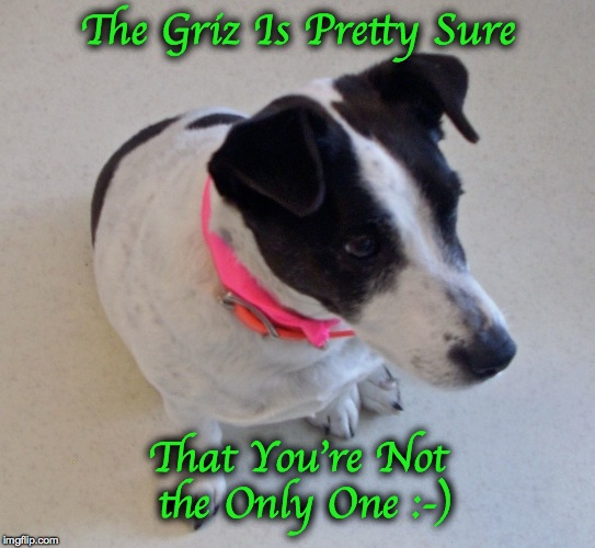 The Griz Is Pretty Sure That You're Not the Only One :-) | made w/ Imgflip meme maker