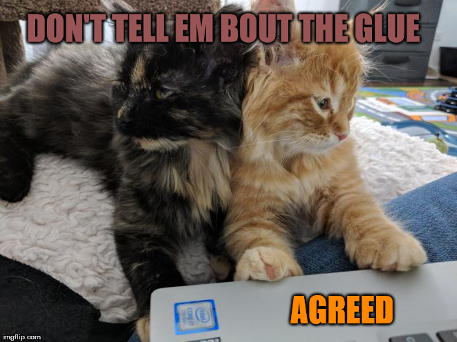 Don't tell em about the glue | DON'T TELL EM BOUT THE GLUE AGREED | image tagged in kittens,kitten,ginger cat,fluffy | made w/ Imgflip meme maker