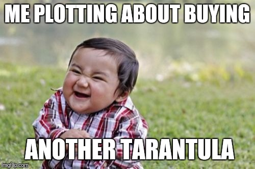 Evil Toddler Meme | ME PLOTTING ABOUT BUYING ANOTHER TARANTULA | image tagged in memes,evil toddler | made w/ Imgflip meme maker