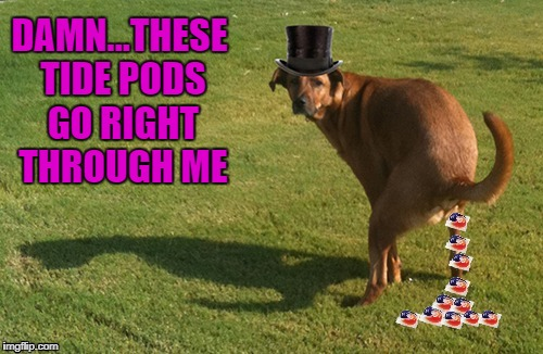 That's one way to cleanse your colon!!! | DAMN...THESE TIDE PODS GO RIGHT THROUGH ME | image tagged in dog pooping tide pods,memes,tide pods,funny,dogs,animals | made w/ Imgflip meme maker