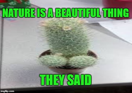 Cocktus | NATURE IS A BEAUTIFUL THING THEY SAID | image tagged in cocktus,nature | made w/ Imgflip meme maker