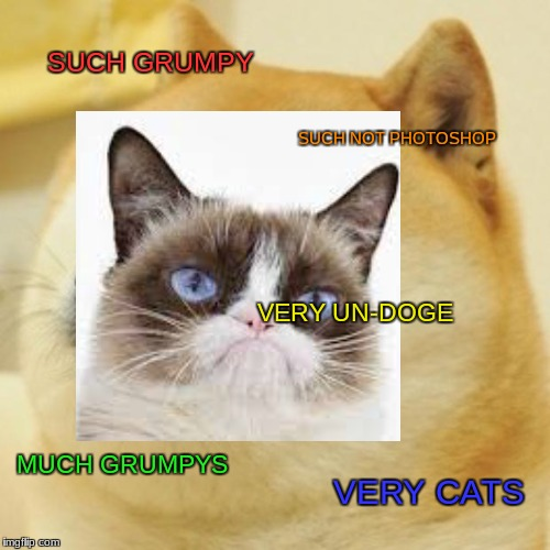 SUCH GRUMPY SUCH NOT PHOTOSHOP VERY UN-DOGE MUCH GRUMPYS VERY CATS | image tagged in grumpy cat,not doge,doge | made w/ Imgflip meme maker