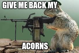 GIVE ME BACK MY ACORNS | image tagged in dank squirl | made w/ Imgflip meme maker