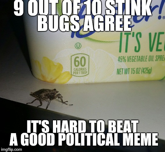 9 OUT OF 10 STINK BUGS AGREE IT'S HARD TO BEAT A GOOD POLITICAL MEME | image tagged in judgmental stink bug at breakfast | made w/ Imgflip meme maker