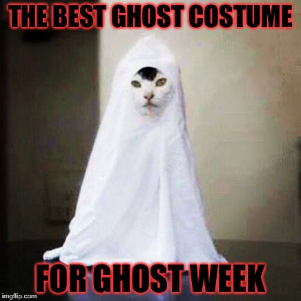 Ghost Cat for Ghost Week Jan. 21-27 A LaurynFlint Event! | THE BEST GHOST COSTUME FOR GHOST WEEK | image tagged in ghost cat,memes,meme,ghost week | made w/ Imgflip meme maker