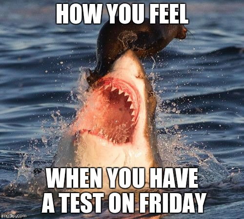Travelonshark Meme | HOW YOU FEEL WHEN YOU HAVE A TEST ON FRIDAY | image tagged in memes,travelonshark | made w/ Imgflip meme maker