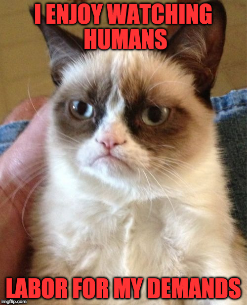 Grumpy Cat Meme | I ENJOY WATCHING HUMANS LABOR FOR MY DEMANDS | image tagged in memes,grumpy cat | made w/ Imgflip meme maker