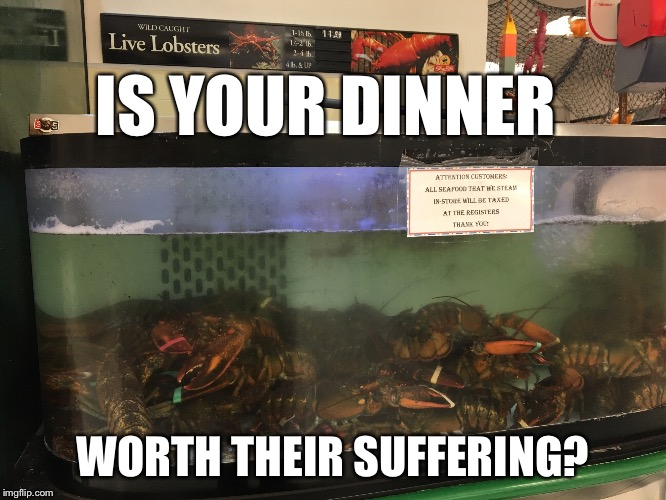 IS YOUR DINNER WORTH THEIR SUFFERING? | image tagged in lobster,global warming,climate change,peta,vegans do everthing better even fart,fishing | made w/ Imgflip meme maker