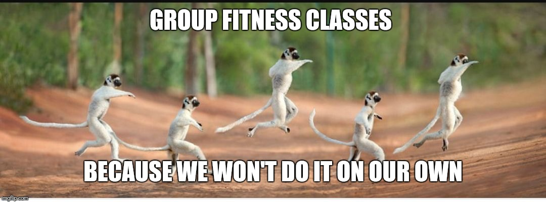 Fitness lemurs | GROUP FITNESS CLASSES BECAUSE WE WON'T DO IT ON OUR OWN | image tagged in group fitness,exercise,gym,workout,fitness | made w/ Imgflip meme maker