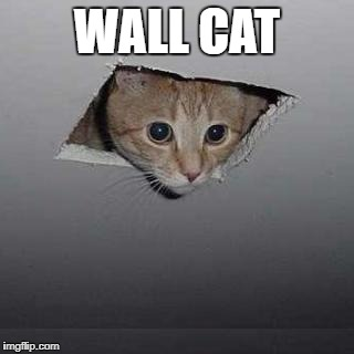 Ceiling Cat | WALL CAT | image tagged in memes,ceiling cat | made w/ Imgflip meme maker