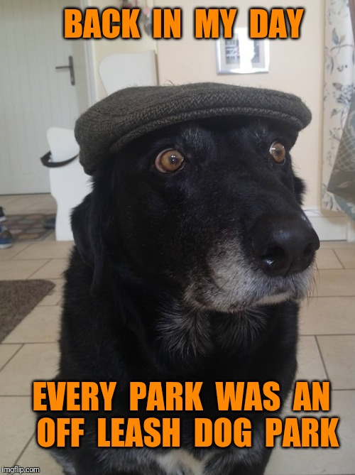 Back In My Day Dog | BACK  IN  MY  DAY EVERY  PARK  WAS  AN  OFF  LEASH  DOG  PARK | image tagged in back in my day dog,dog | made w/ Imgflip meme maker