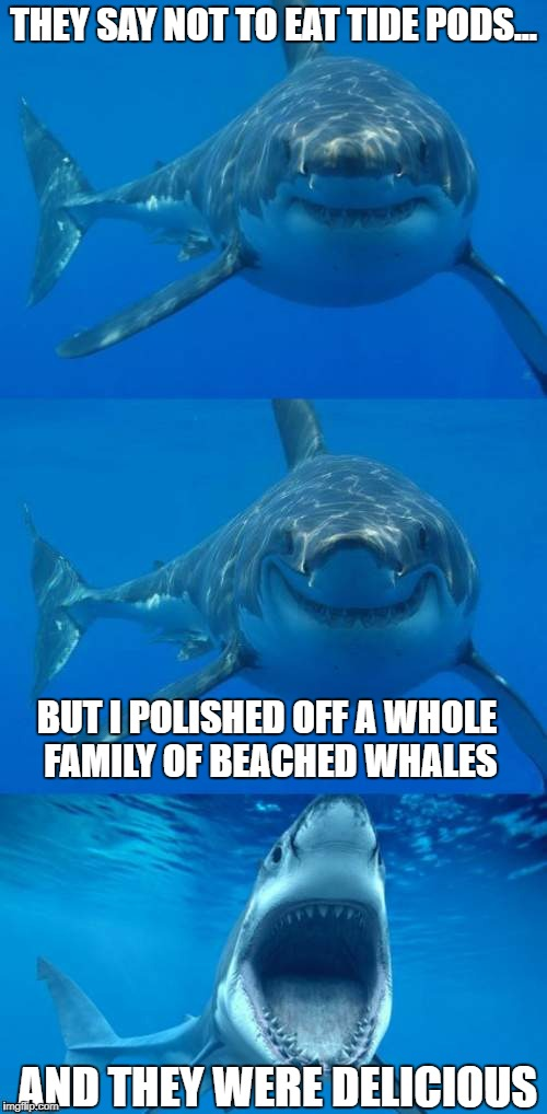 Sharks tell the best jokes. | THEY SAY NOT TO EAT TIDE PODS... BUT I POLISHED OFF A WHOLE FAMILY OF BEACHED WHALES AND THEY WERE DELICIOUS | image tagged in bad shark pun,tide pods | made w/ Imgflip meme maker