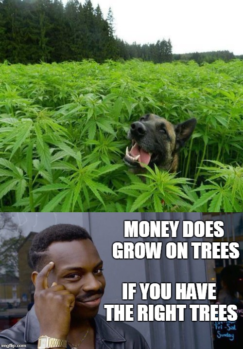 MONEY DOES GROW ON TREES IF YOU HAVE THE RIGHT TREES | made w/ Imgflip meme maker