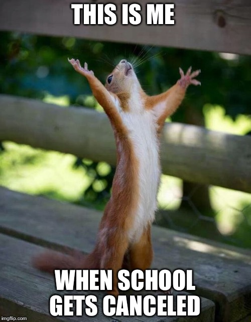school just got canceled, I'm like  |  THIS IS ME; WHEN SCHOOL GETS CANCELED | image tagged in happy squirrel,school meme | made w/ Imgflip meme maker