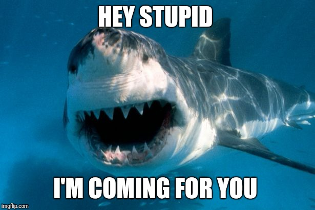 HEY STUPID I'M COMING FOR YOU | image tagged in shark | made w/ Imgflip meme maker