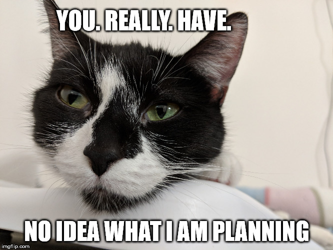 Cat in deep thought | YOU. REALLY. HAVE. NO IDEA WHAT I AM PLANNING | image tagged in pumice thinking,tuxedo,cat,black and white,close up,whiskers | made w/ Imgflip meme maker