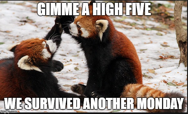 GIMME A HIGH FIVE WE SURVIVED ANOTHER MONDAY | image tagged in tuesday | made w/ Imgflip meme maker