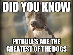 Image tagged in pitbull dog - Imgflip