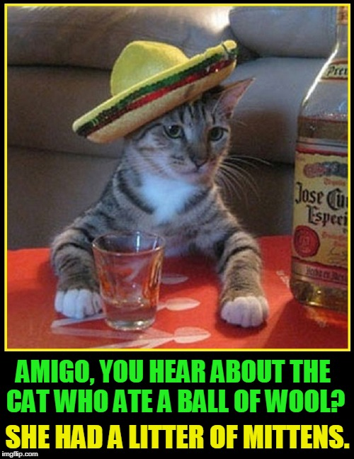 Senor Don Gato, Stand-Up Comic | AMIGO, YOU HEAR ABOUT THE CAT WHO ATE A BALL OF WOOL? SHE HAD A LITTER OF MITTENS. | image tagged in vince vance,cats,cat memes,mexican cat,jose cuervo,tequila | made w/ Imgflip meme maker