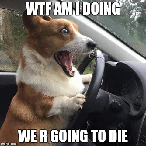 Rage Corgi |  WTF AM I DOING; WE R GOING TO DIE | image tagged in rage corgi | made w/ Imgflip meme maker