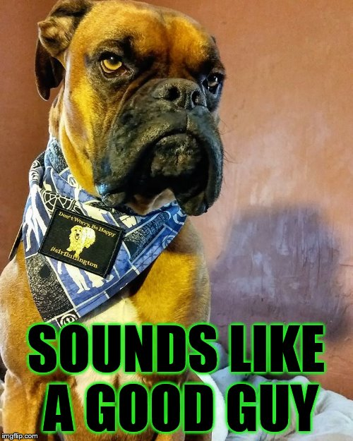 Grumpy Dog | SOUNDS LIKE A GOOD GUY | image tagged in grumpy dog | made w/ Imgflip meme maker