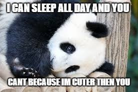 I CAN SLEEP ALL DAY AND YOU CANT BECAUSE IM CUTER THEN YOU | image tagged in panda | made w/ Imgflip meme maker