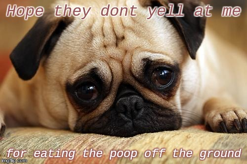 sad pug | Hope they dont yell at me for eating the poop off the ground | image tagged in sad pug | made w/ Imgflip meme maker