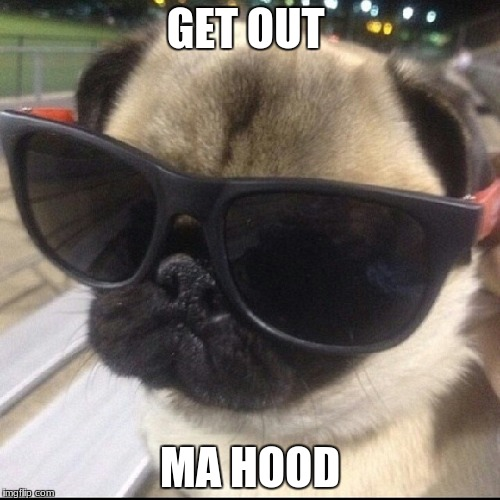 pug life | GET OUT MA HOOD | image tagged in pug life | made w/ Imgflip meme maker