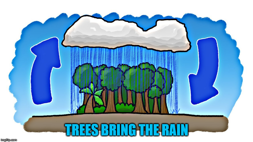 Rain Cycle | TREES BRING THE RAIN | image tagged in precipitation,trees,rain,condensation,forrest,evaporation | made w/ Imgflip meme maker
