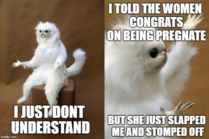 Persian Cat Room Guardian | I JUST DONT UNDERSTAND I TOLD THE WOMEN CONGRATS ON BEING PREGNATE BUT SHE JUST SLAPPED ME AND STOMPED OFF | image tagged in memes,persian cat room guardian | made w/ Imgflip meme maker