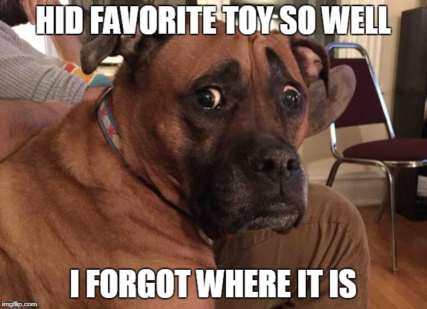 Oh crap dog | HID FAVORITE TOY SO WELL I FORGOT WHERE IT IS | image tagged in oh crap dog | made w/ Imgflip meme maker