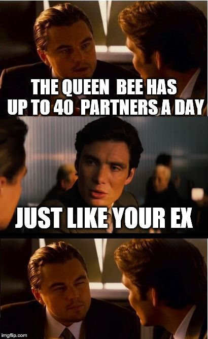Inception Meme | THE QUEEN  BEE HAS UP TO 40  PARTNERS A DAY JUST LIKE YOUR EX | image tagged in memes,inception | made w/ Imgflip meme maker