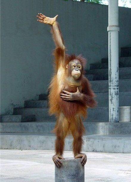 23aeq6 monkey raising hand blank template imgflip