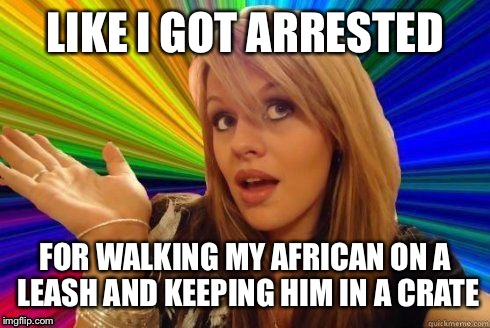 LIKE I GOT ARRESTED FOR WALKING MY AFRICAN ON A LEASH AND KEEPING HIM IN A CRATE | made w/ Imgflip meme maker