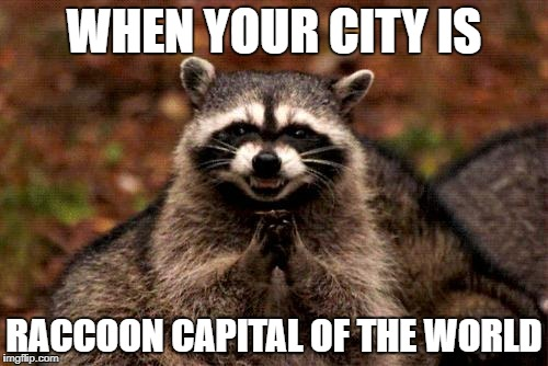 Evil Plotting Raccoon Meme | WHEN YOUR CITY IS RACCOON CAPITAL OF THE WORLD | image tagged in memes,evil plotting raccoon | made w/ Imgflip meme maker