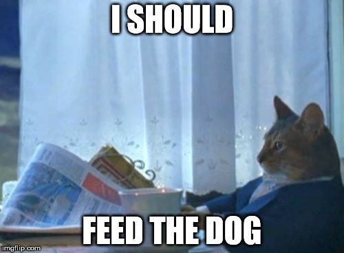 I Should Buy A Boat Cat Meme | I SHOULD FEED THE DOG | image tagged in memes,i should buy a boat cat | made w/ Imgflip meme maker
