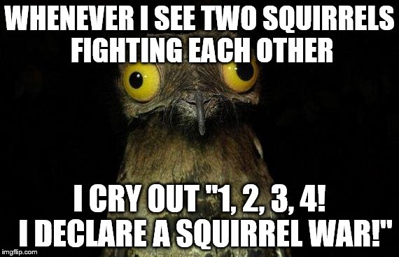 "Weird Stuff I Do Potoo | WHENEVER I SEE TWO SQUIRRELS FIGHTING EACH OTHER I CRY OUT ""1, 2, 3, 4!  I DECLARE A SQUIRREL WAR!"" 
