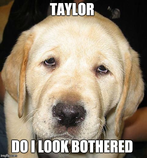 Do I Look Bothered | TAYLOR DO I LOOK BOTHERED | image tagged in do i look bothered | made w/ Imgflip meme maker