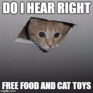 Ceiling Cat | DO I HEAR RIGHT FREE FOOD AND CAT TOYS | image tagged in memes,ceiling cat | made w/ Imgflip meme maker