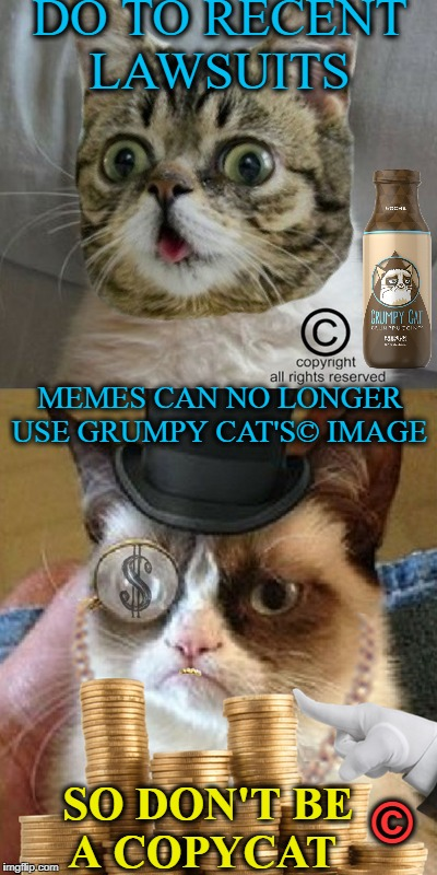 Fat Cat's show me the meme money  | DO TO RECENT LAWSUITS SO DON'T BE A COPYCAT MEMES CAN NO LONGER USE GRUMPY CAT'S© IMAGE © | image tagged in grumpy cat,copyright,copycat,memes,funny,rich | made w/ Imgflip meme maker